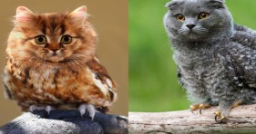 adorable cute meowls caturday funny