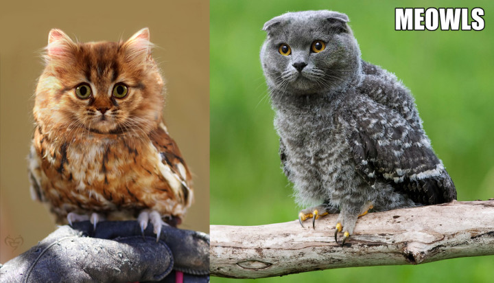 adorable fluffy meowls