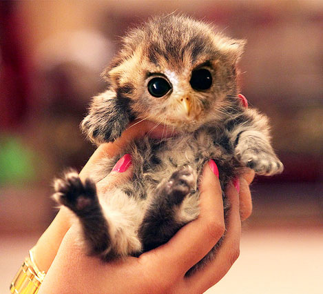 fluffy kitten with owl face caturday