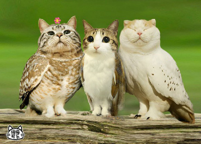 guardian meowls caturday lolcats