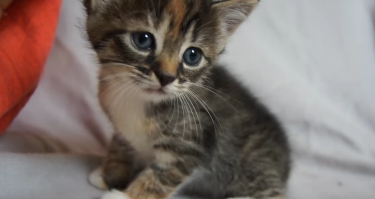 Is This The Most Adorable Kitten In The World Cats vs Cancer
