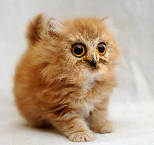 orange kitten owl face caturday funny cats