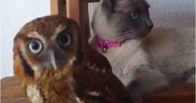 adorable unlikely friendships caturday cat and owl