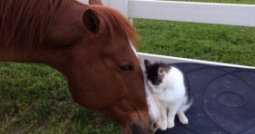 sappy the cat and dakota the horse adorable