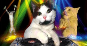 caturday edm cats funny lolcats