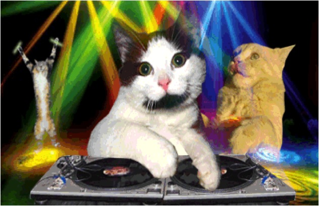 Celebrate Caturday With Edm Cats And More Cats Vs Cancer