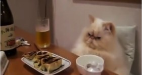 hilarious cats acting like humans compilation