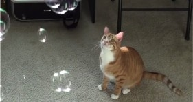 adorable cole & marmalade love catnip bubbles