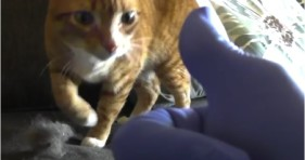 cole & marmalade cat life hacks cute