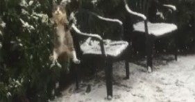 funny cat misses the heat in first snow storm lolcats
