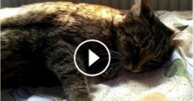 cats need love and adopt old cat kitties adorable