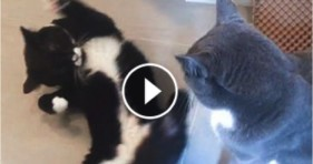 cute kitty seductive kitten dance moves
