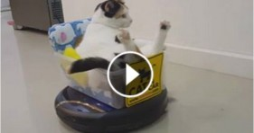 hilarious funny roomba cat does houseworkhilarious funny roomba cat does housework