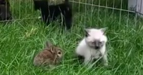 adorable bunny and kitty being best friends