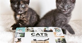 adorable cats of instagram holiday gift kitten book