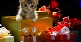 xmas holiday gifts amazon smile charity cute kittens