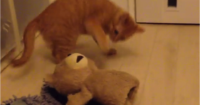 adorable orange kitty practices karate with teddy