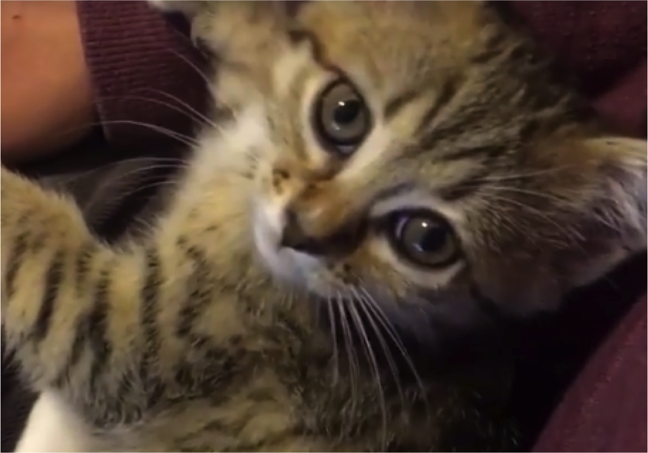 Sweet Sweet Kitten s Meow Will Make You Smile Cats vs Cancer