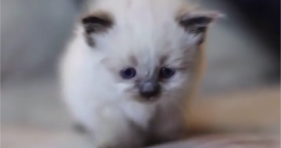 cute compilation of adorable fluffy kittens