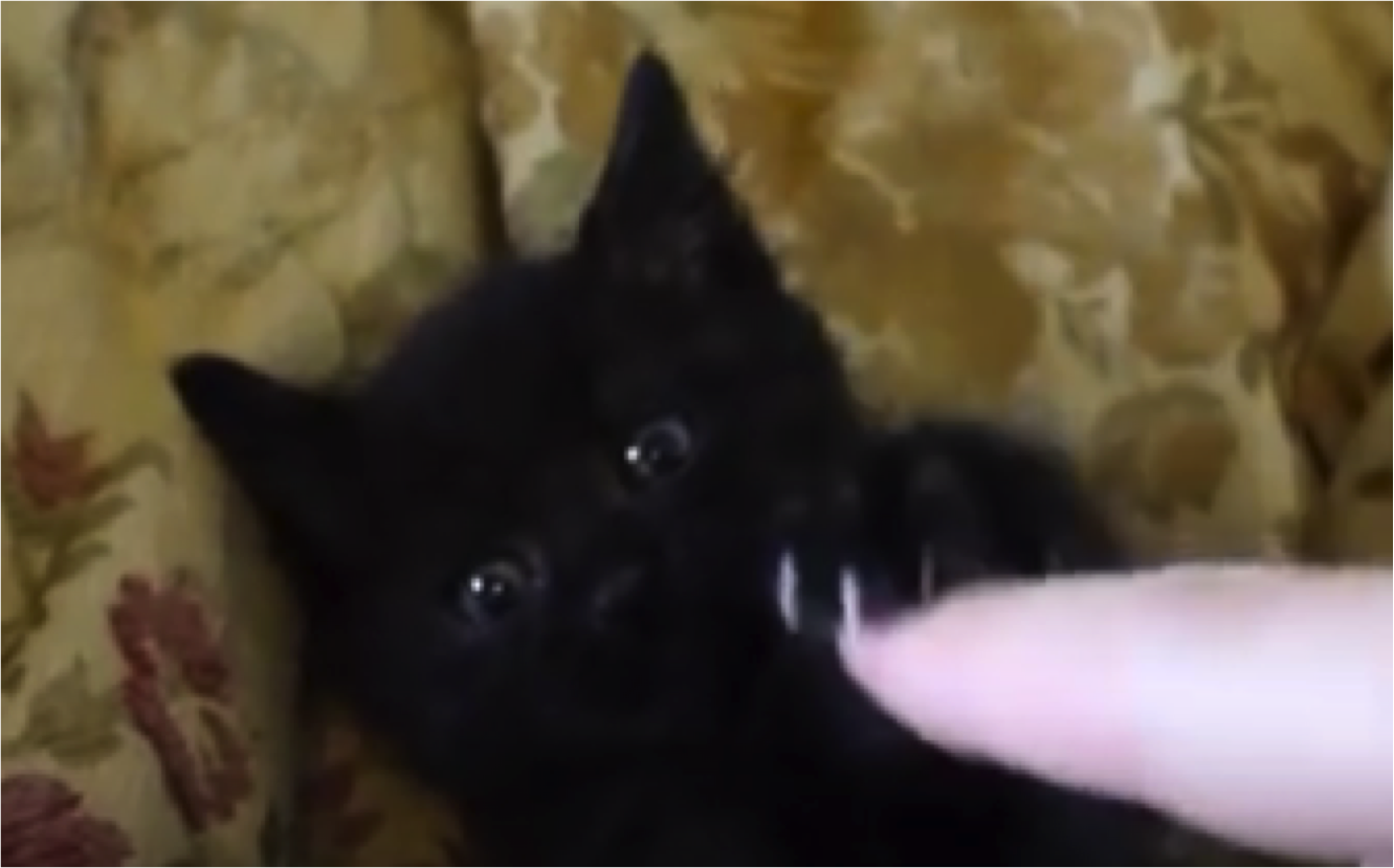 Cat Tries To Save Human