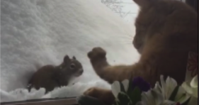 adorable cat squirrel appear to be best furriends