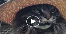 adorable furry gardens cat loves summer
