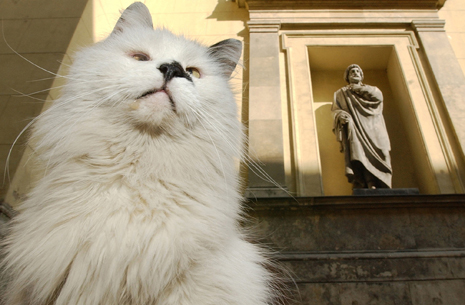 Vaska the cat, one of the Hermitage Museum mice hunters, seen in the museums yard, with an antic statue on the background, in St. Petersburg, in this April 25, 2004 photo. Cats have been part of the Hermitage's security system since its founding days. (AP Photo/Dmitry Lovetsky)