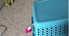Clever Cat Helps with Laundry