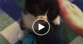 cute baby kitten is clumsy and adorable