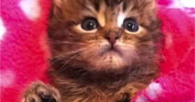 tiny kitten fixes cuteness withdrawal adorable