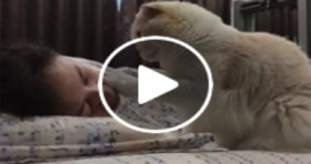 fluffy white cute kitten wake up mom