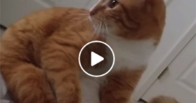 adorable clumsy cats can't land on their feet funny