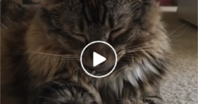 cute fluffy kitty sleep through best movies