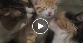 cute kitty gets bath time tag team
