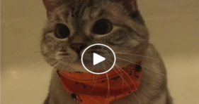 cutest cat on instagram adorable nala cat melts hearts