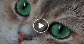 adorable green eyed beauty gorgeous cat