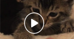 adorable playful baby kitten love