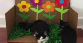 cute school of baby kittens in kittengarden