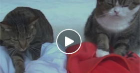 adorable cats give massage lessons cute