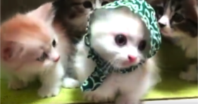 adorable gang of baby kittens