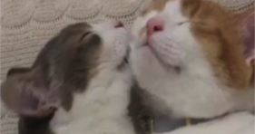 adorable kitties love make out session