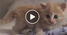 cute fluffy baby kitty loves squeaker