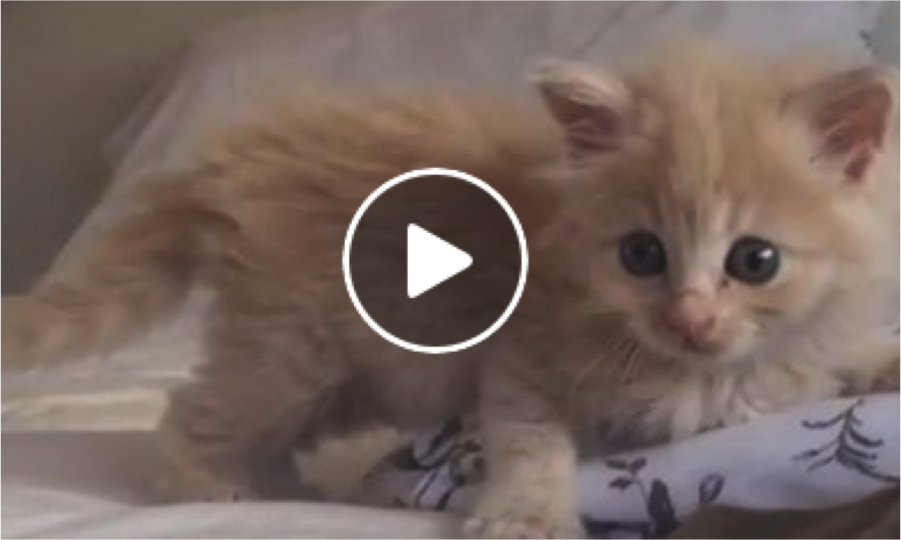 Fall In Love With This Fluffy Baby Squeaker Cats Vs Cancer