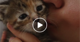 the dodo cute how to rescue kittens video