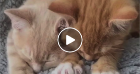 adorable orange kitties You Knead To Watch Paw Dance