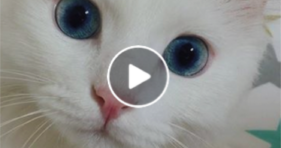 What's Everyone Looking At? blue cat eyes cute kitty