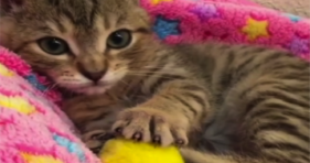 Cute Kitty Alert! Cute Kitty Alert! cats vs cancer
