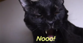 Want To Know What Cats Are Saying? cats vs cancer