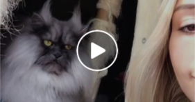 Meet Another Kitty In The Grumpy Cat Clan cats vs cancer
