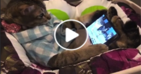 Netflix And Chill Cat! cats vs cancer